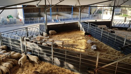 stokbord sheet sheep pen