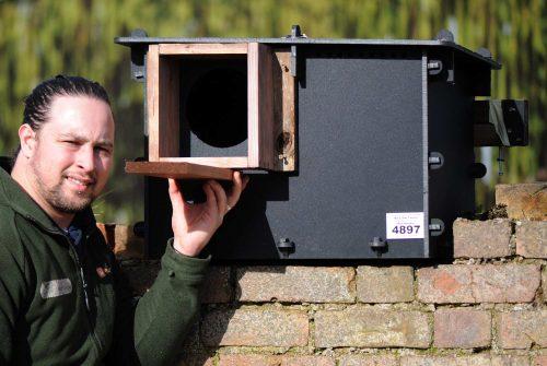 barn owl nest construction
